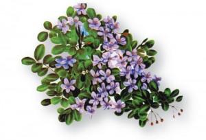 The Jamaica National Flower - Lignum Vitae